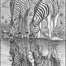 Thirsty Zebras by Tara Hale