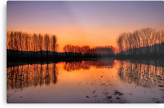 Naked trees by Hercules Milas