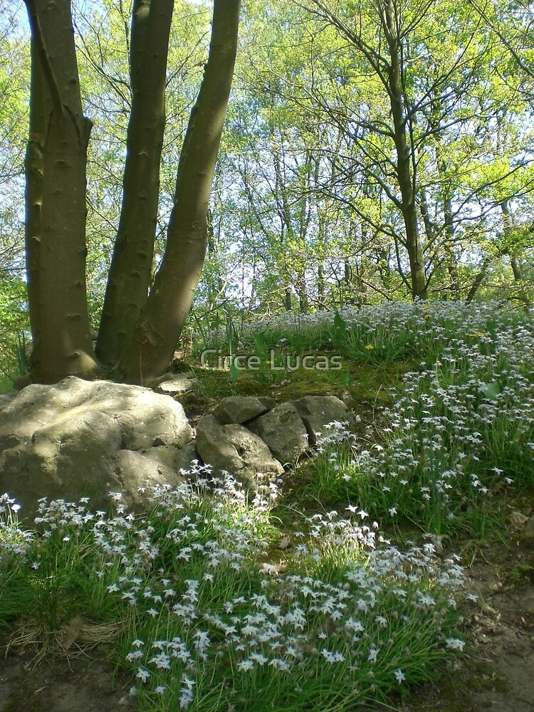 Glade in Spring by Circe Lucas