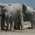 The Elephants and the Oryx by naturalnomad