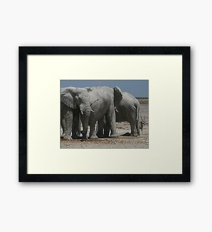 The Elephants and the Oryx Framed Print