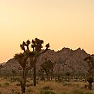 Joshua Tree at sunset panorama by Flux Photography