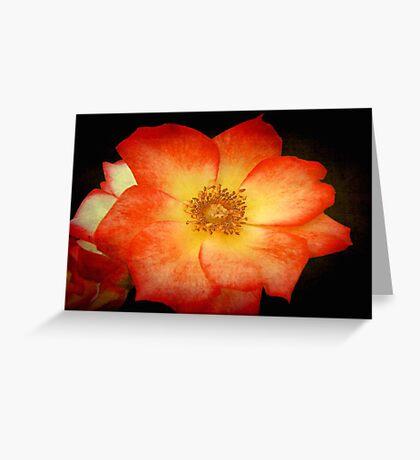 Orange Sorbet © Greeting Card