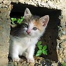 Hello Kitty by mrvica