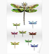 dragonfly squadron Poster