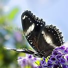 Butterfly above by Louise Docker
