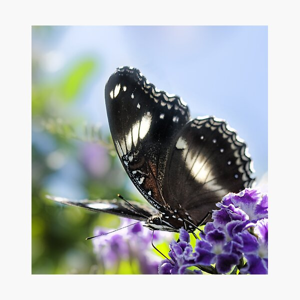 Butterfly above Photographic Print