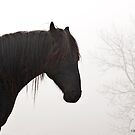 Lost in a Fog by GrayHorseDesign