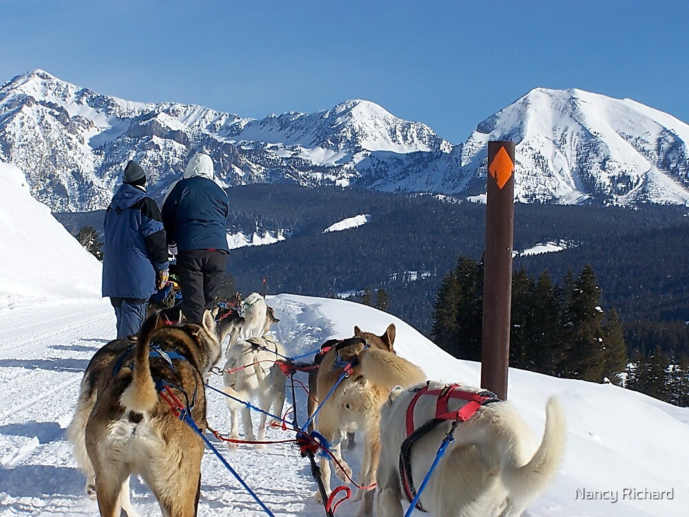 Dog sledding in the mountains! by Nancy Richard