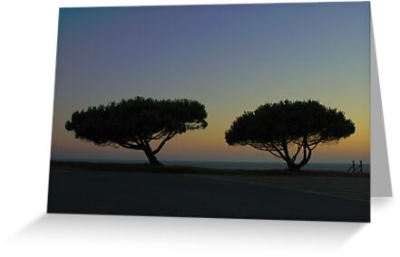 Sea Pine Trees in France by 7horses