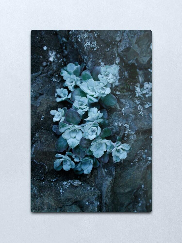 Alternate view of cool blue wild succulents Metal Print