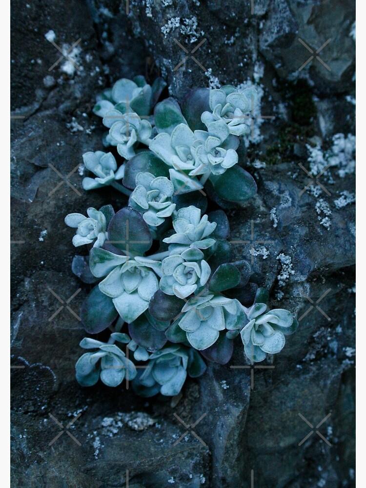 cool blue wild succulents by craftordiy