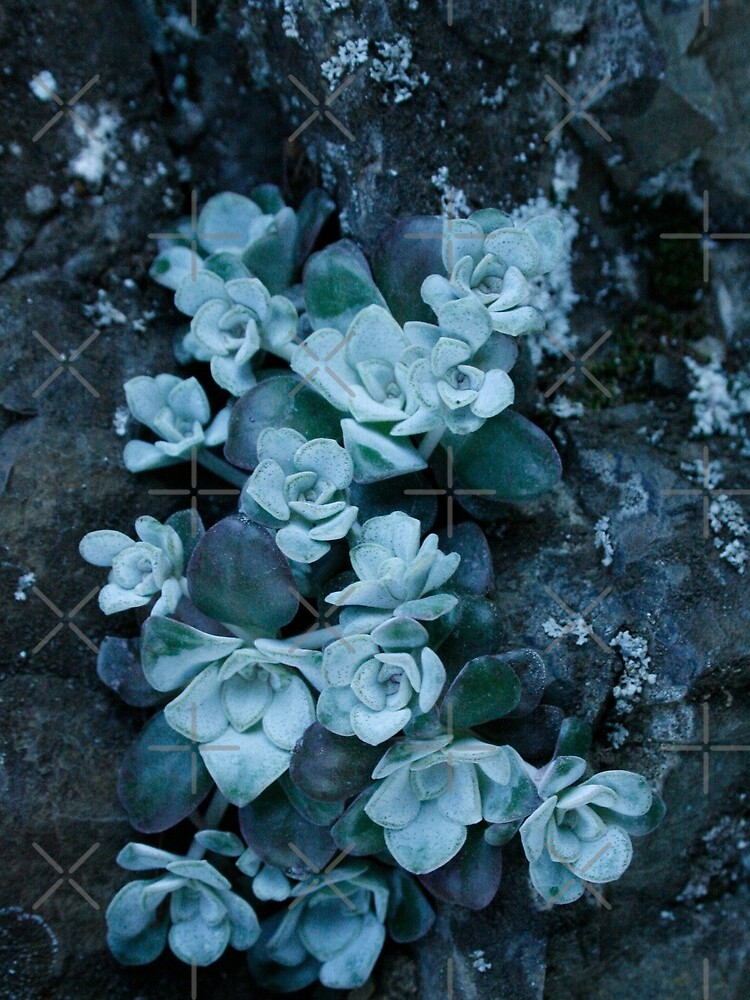 cool blue wild succulents by craftordiy