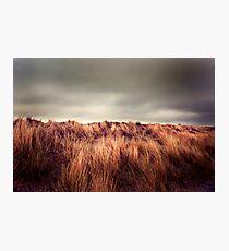Marram Grass.. Photographic Print
