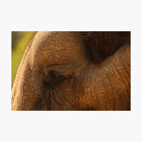 Elephant Eye Photographic Print