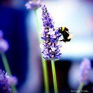 Honey Bee by photo-kia