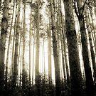 Weinlese-Foto von Kiefernwald 8 von AnnArtshock