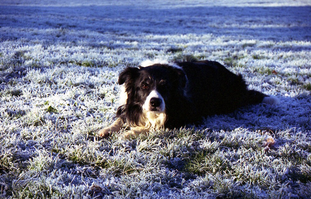 Kibo in the frost. by Michael Haslam