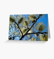 catkins Greeting Card