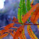 Changing Seasons by Scott Chambless