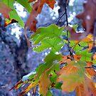 Fall Colors by Scott Chambless