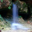 Cave Spring by Scott Chambless