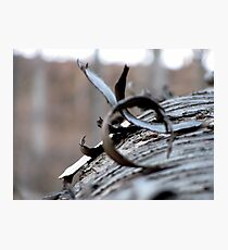 The Wooden Curl Photographic Print