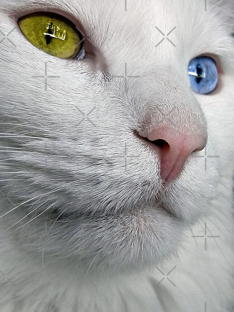 Do Cats Wonder About The Meaning of Life? by Scott Mitchell