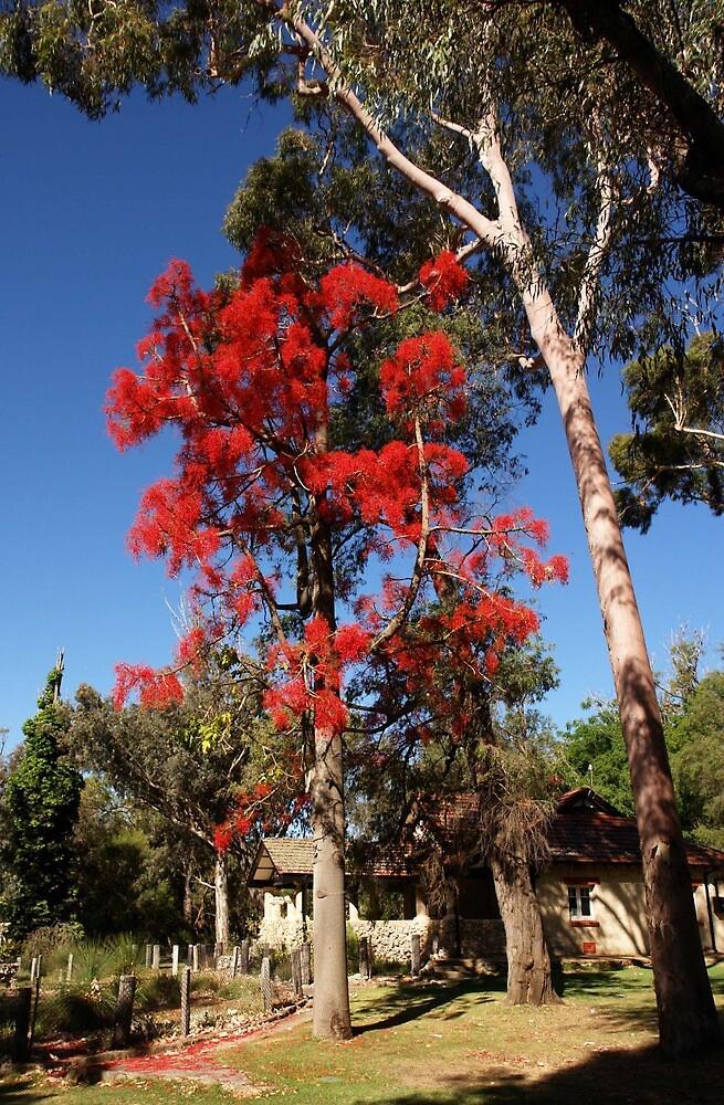 Colour in a West Australian park by georgieboy98