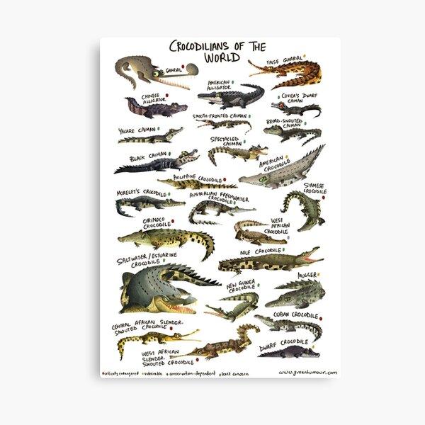 Crocodilians of the World Canvas Print