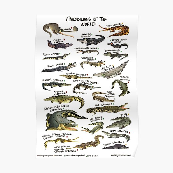 Crocodilians of the World Poster