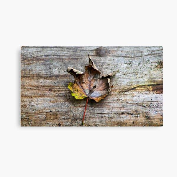 Leaf on Log Canvas Print
