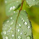 Rain drop by JamesRoberts