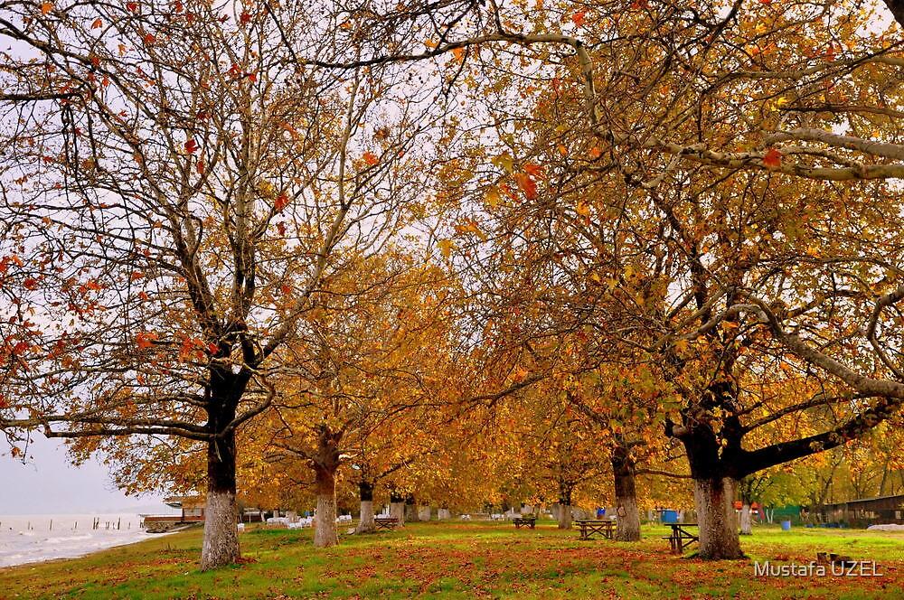 autumn near lake by Mustafa UZEL