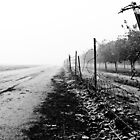 The Chill Of Fog by Jonathan Coe