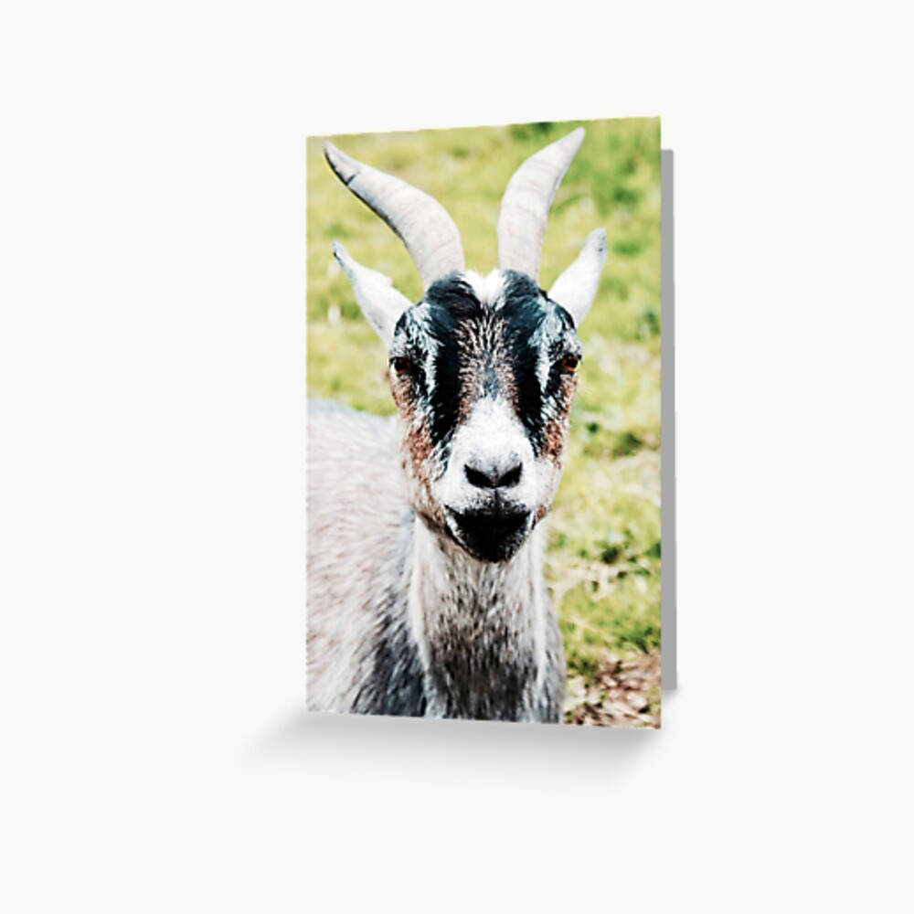 Goat Greeting Card