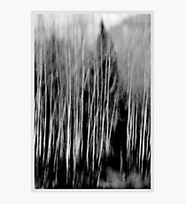 Blurred  Photographic Print