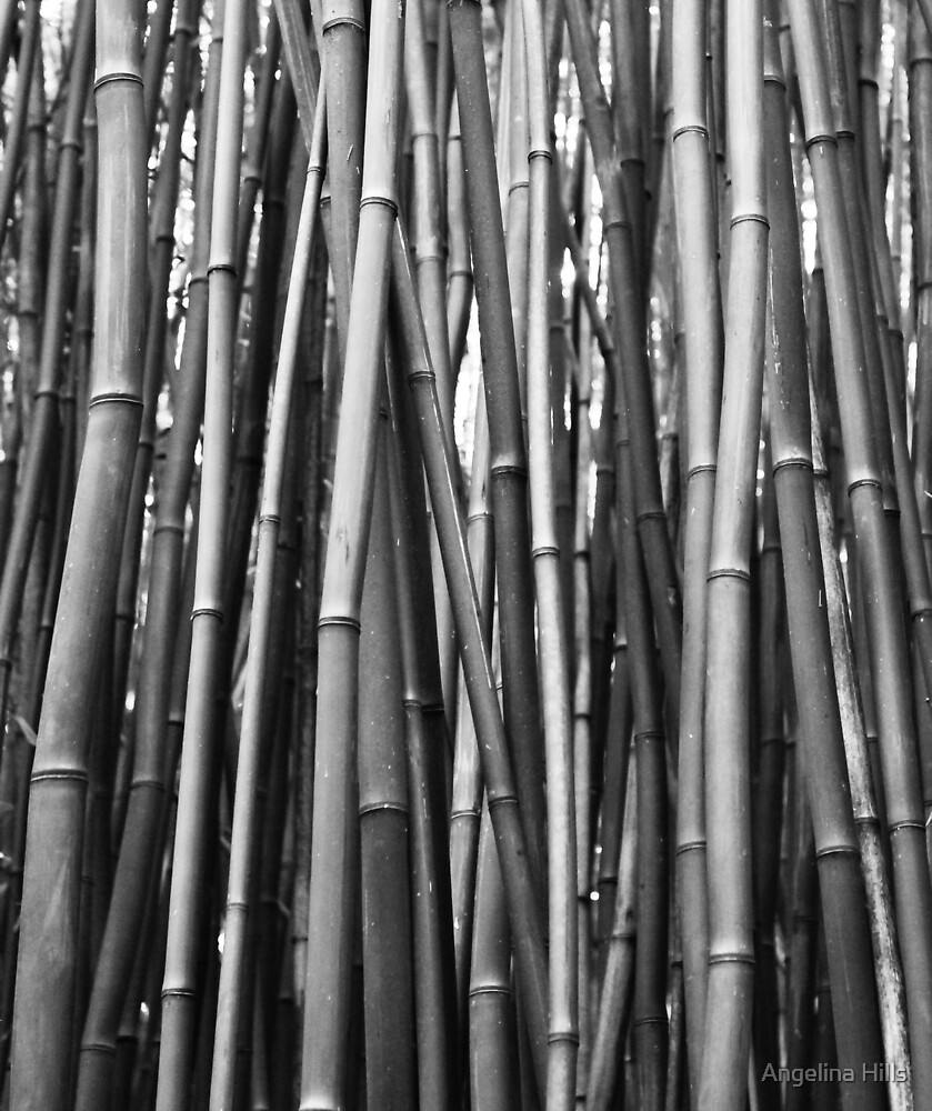 Black and White Bamboo  by Angelina Hills