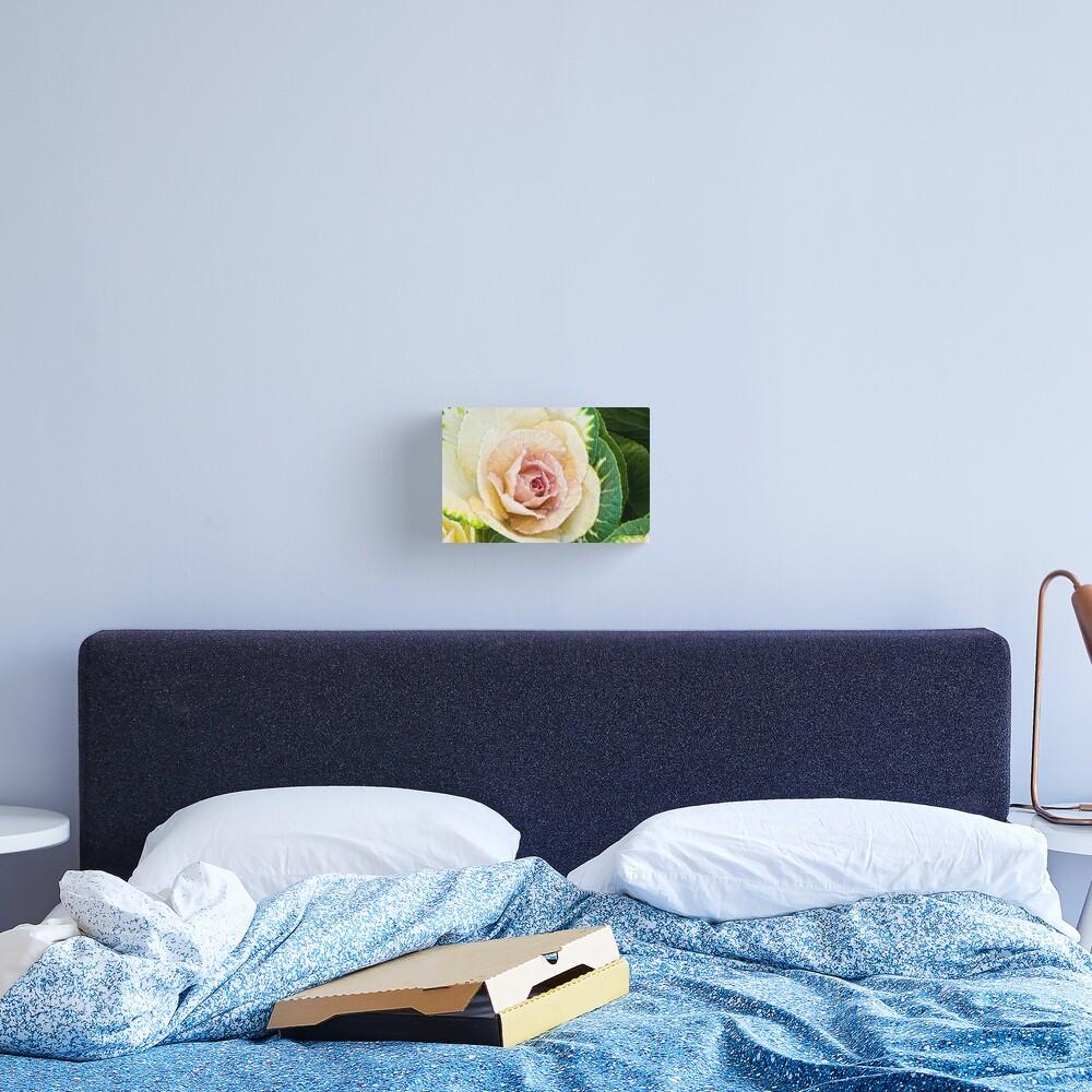 Flowering Kale Canvas Print