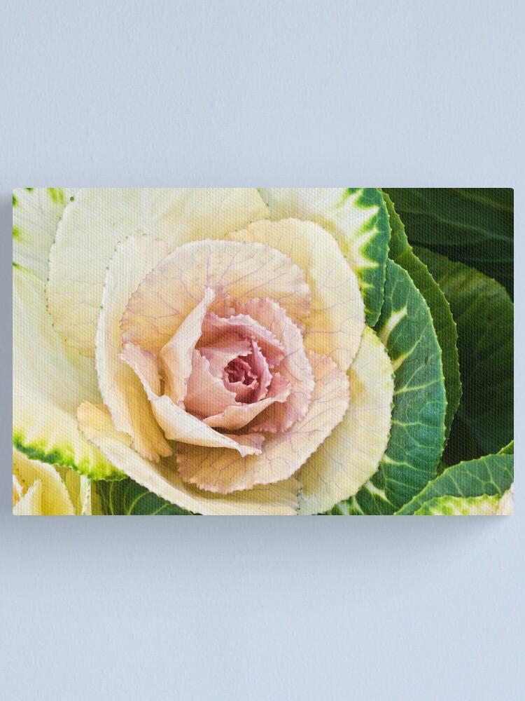 Alternate view of Flowering Kale Canvas Print