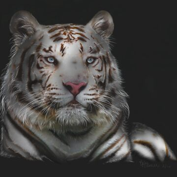 Sublime - Bengal Tiger by ckdesigns