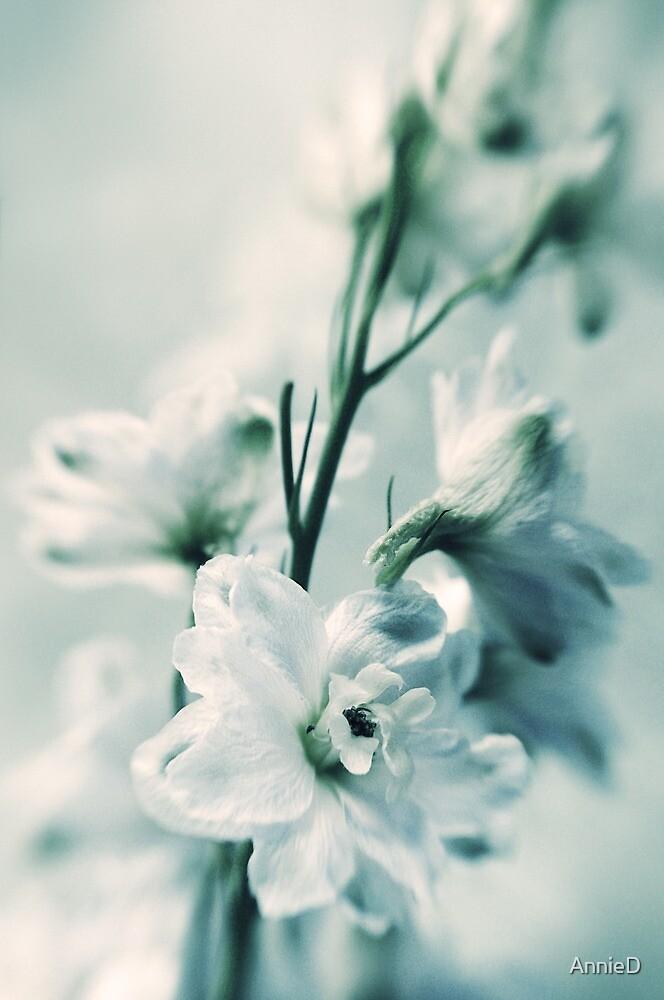 Delphinium Blues by AnnieD