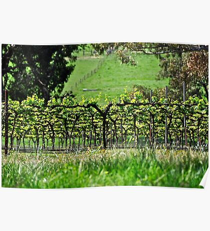 'V' is for Vine, Vino.....View! Poster