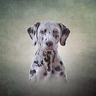 Drawing  Dog Dalmatian by bonidog
