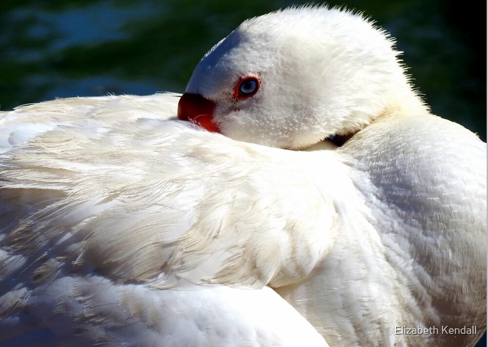 A duck by Elizabeth Kendall