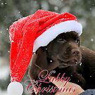 Labby christmas by Alan Mattison