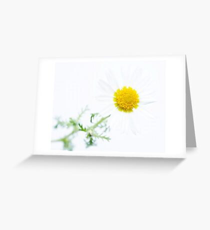 daisy white Greeting Card