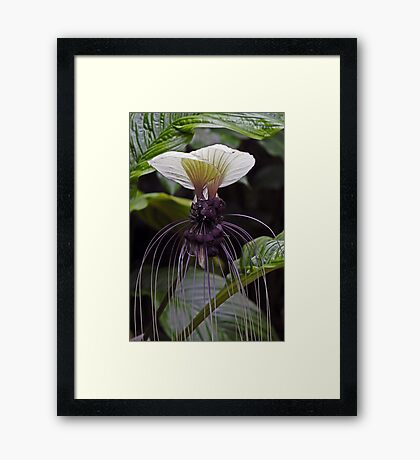 Bat Flower Framed Print