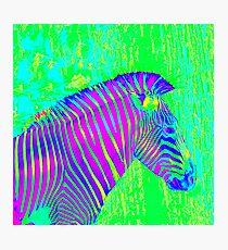 neon zebra 2 Photographic Print
