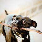 My stick! by Bec  Brindley